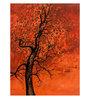 Art Zolo Paper 22 x 30 Inch The Orange Tree Unframed Artwork Painting