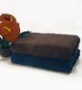 BIANCA Chocolate & Navy 100% Terry Cotton Bath Towel - Set of 2