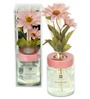 Decoaro Rose Evergreen Collection Musk Diffuser