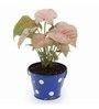 Exotic Green Syngonium Pink Indoor Plant In Metal Blue Pot