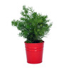 First Smart Deal Red Gi Cone Table Top Pot