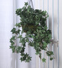 Fourwalls Green Synthetic Tall Ivy Hanging Basket Decorative Artificial Plant