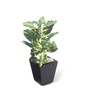 Fourwalls Multicolour Synthetic Tall Artificial Mini Queues Plant with Vase
