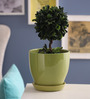 Gaia Green Glazed Ceramic 8 x 8.5 Inch Table Top Planter with Plate