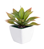Ginni Bloom Green PVC & Synthetic Artificial Echivera Leaf Succulent