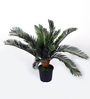 Ginni Bloom Green PVC & Synthetic Decorative Artificial Cycas Plant
