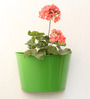 Green Gardenia Green Metal Wall Planter