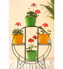 Green Gardenia Iron Hoop Round Pot Stand With 4 Metal Planter in Yellow & Green color