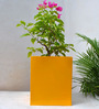 Green Gardenia Yellow Rectangular Pot