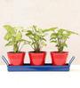 Green Gardenia Metal Table Top Red Pots with Dark BlueTray