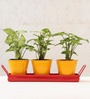 Green Gardenia Metal Table Top Yellow Pots with Red Tray