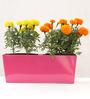 Green Gardenia Pink Metal Rectangular Table Top Planter