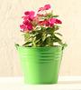 Green Gardenia Table Top/Hanging Bucket Planter-Green