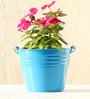 Green Gardenia Table Top/Hanging Bucket Planter-Light Blue