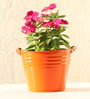Green Gardenia Table Top/Hanging Bucket Planter-Orange
