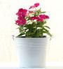 Green Gardenia Table Top/Hanging Bucket Planter-White