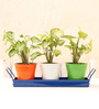 Green Gardenia Tri Colour Metal Table Top Planters with Tray