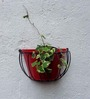 Green Gardenia Wall Basket with Red Metal Pot