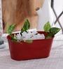 Green Girgit Red Oval Planter