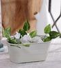 Green Girgit White Oval Planter