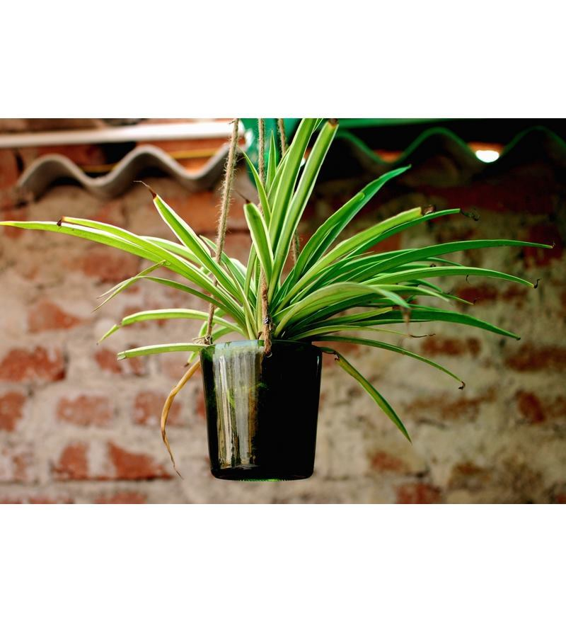 Kavi Green Hangout Planter  available at Pepperfry for Rs.338
