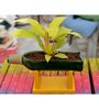 Kavi Stand-Up Planter (Yellow)