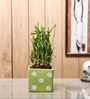 Nurturing Green Lucky Bamboo 3 Layer Plant & Ceramic Square Pot