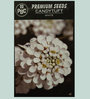 PBC Candytuft White Premium Seeds (Pack of 100 Seeds)