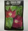 PBC Morning Glory Impomea Creeper - Pack of 2 (100 Seeds)