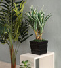 Pollination White & Green Polyester Dracaena Artificial Plant with Pot
