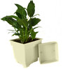 Rolling Nature Good Luck Peace Lily in White Square Pot