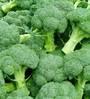 Seedlings India Broccoli Veg Seeds