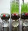 Seedlings India Growing Grass Heads