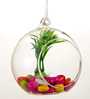 Take Me Home Glass Medium Hanging Ball