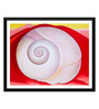 Tallenge Paper 17 x 0.5 x 12 Inch Georgia O'Keeffe White Shell with Red Framed Digital Poster