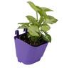 Violet Vertical Hook Pot  (Pack of 100) By Chhajed Garden