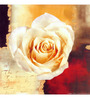 Wall Decor White Canvas 24 x 24 Inch Modern Rose Framed Digital Art Print