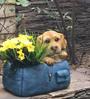 Wonderland the Dog in the Bag Flower Pot