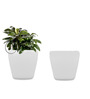 Yuccabe Italia Combo for 2 Stoic (White Self Watering Planters)