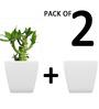 Yuccabe Italia Pack of 2 Stella (White planters)