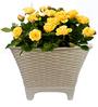 Yuccabe Italia Tok 8 Inches Round Basket Planter