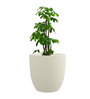 Yuccabe Italia White P Cup Planter -Medium