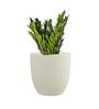 Yuccabe Italia White P Cup Small Planter