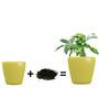 Yuccabe Italia Yellow Polystone Stoic planters